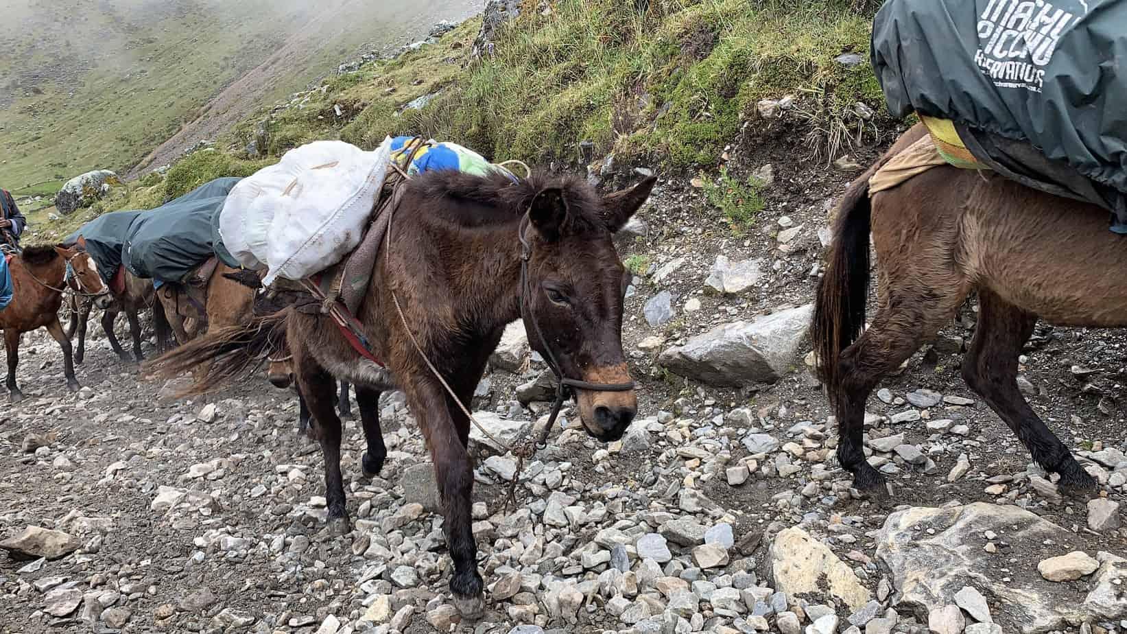 Salkantay Trek Mules