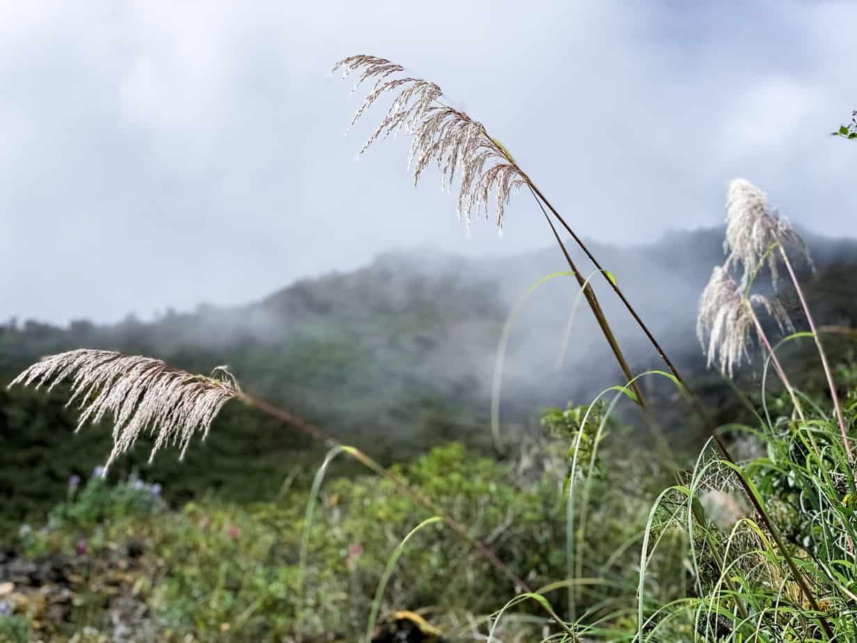 Salkantay Trek Flora and Fauna