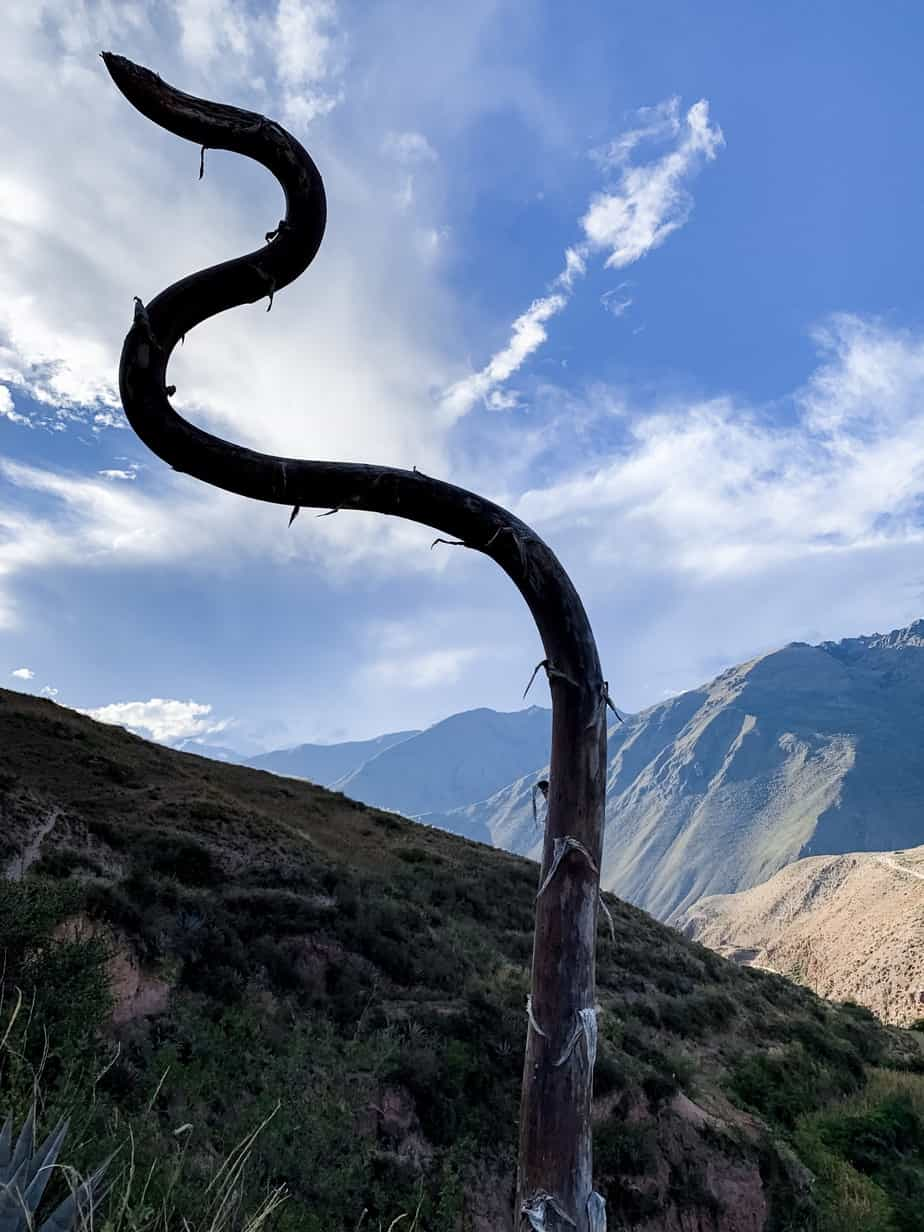 Unique Plants in Sacred Valley Peru