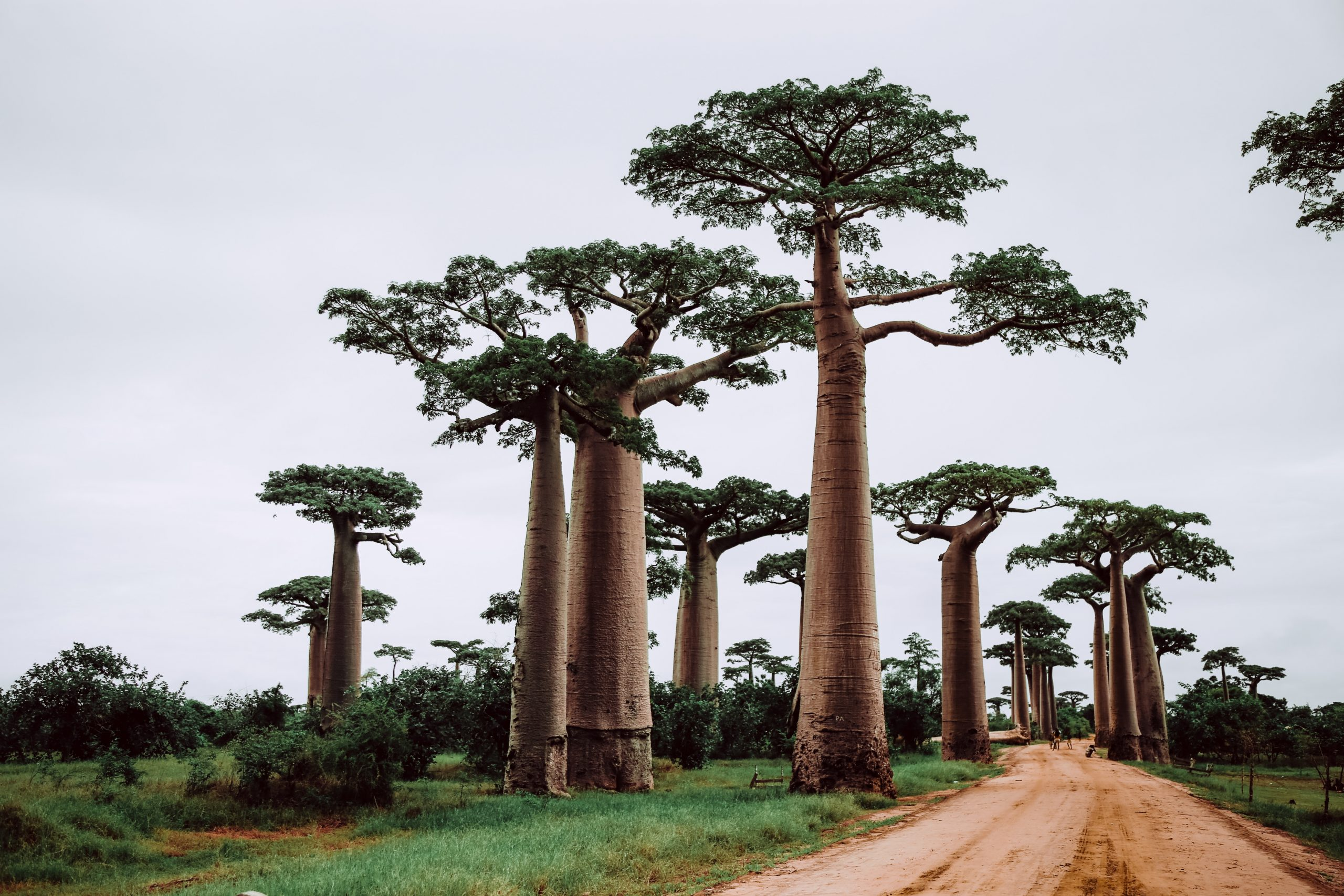 Madagascar | Top 5 Most Underrated Travel Destinations in the World | MVMT Blog