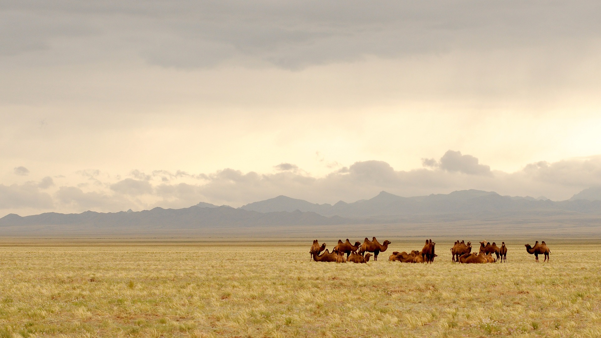 Mongolia | Top 5 Most Underrated Travel Destinations in the World | MVMT Blog