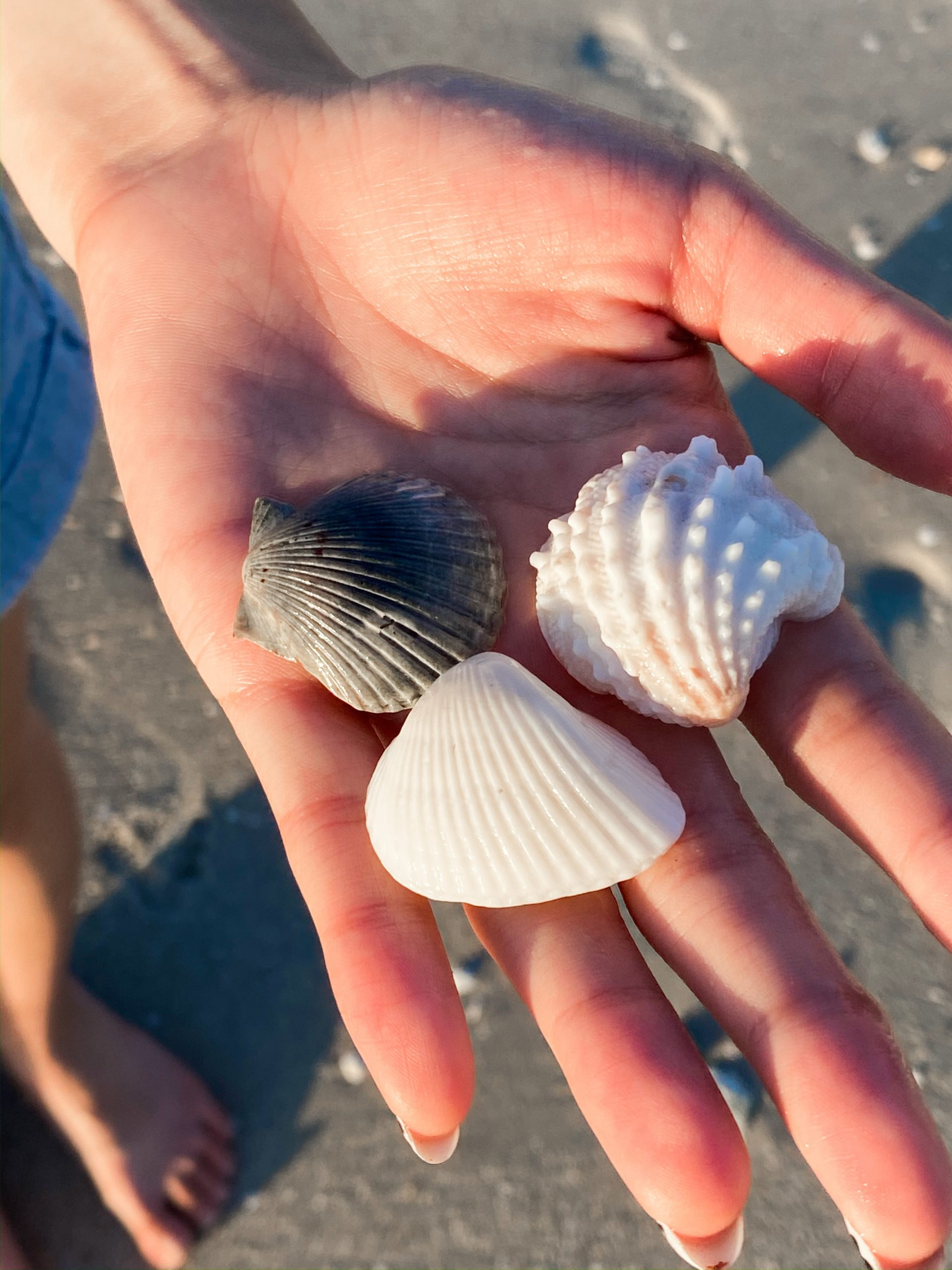 Seashells on the Naples shoreline